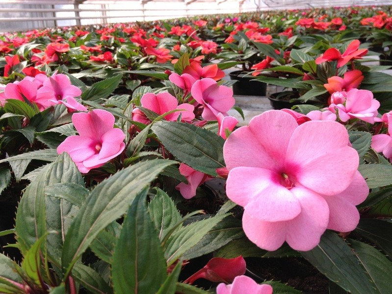 Topfpflanzen flora plus zehma for Pflanzen lieferservice